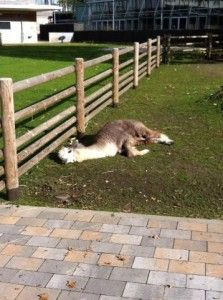 Take a break at the Karlsruhe Zoo