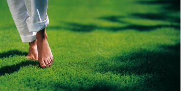 Lawn jobs for April: Feed lawns with organic fertiliser