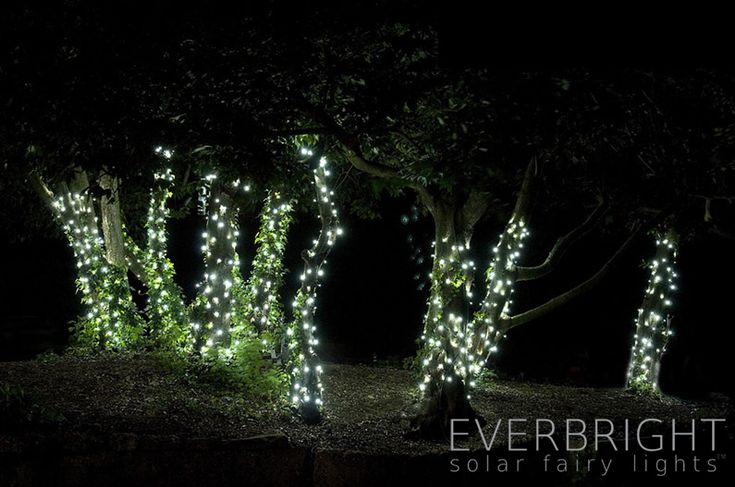 Everbright Solar Fairy Lights - White 100 LEDs. Also available in blue, multicoloured, and warm white. £29.99.
