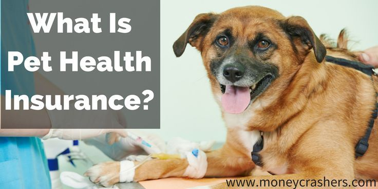 What Is Pet Health Insurance? What you need to know about the costs, coverage and policies.