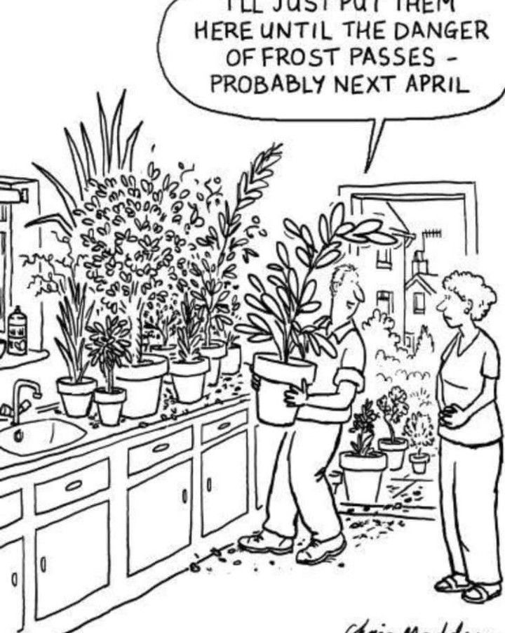 Cartoon Humor Funnymemes Gardening With Images Gardening