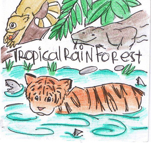 Tropical Rainforest Animals Drawing | Tropical RainForest ...