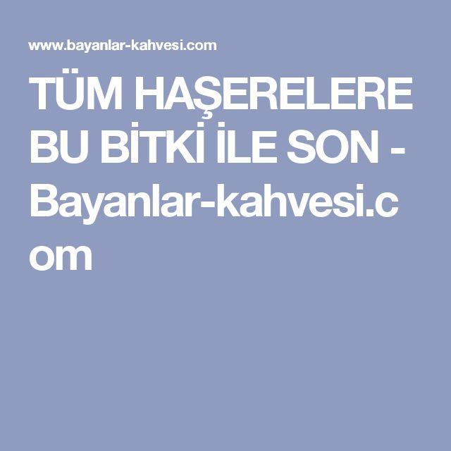 TÜM HAŞERELERE BU BİTKİ İLE SON - Bayanlar-kahvesi.com