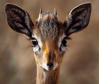 Natuur, Dieren, Biche, Fauna, Wild