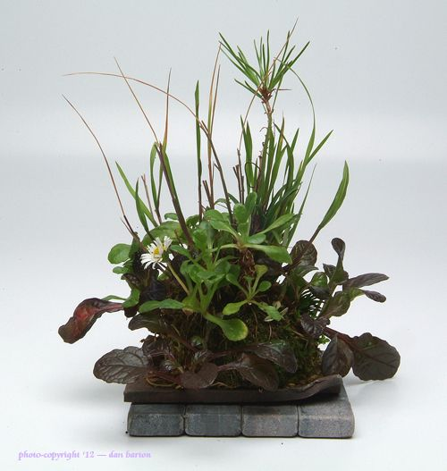 """Kokedama is a ball of Keto tsuchi (soil) covered in moss with plants arranged in and on it. This form of planting has also become very popular in Japan and has been known as """"the poor man's Bonsai""""."""