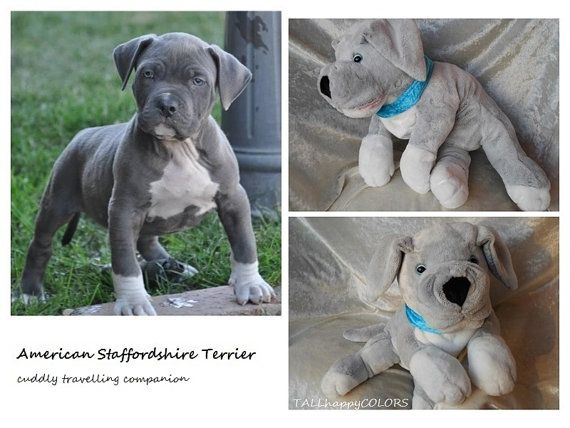 American STAFFORDSHIRE Terrier plush soft toy by TALLhappyCOLORS