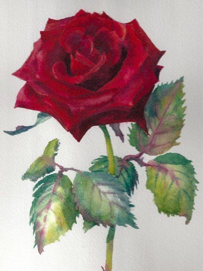 Схема вышивки «Красная роза» - Вышивка крестом