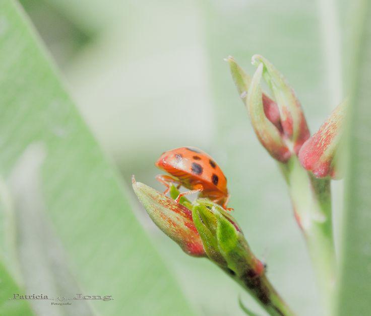 Photograph ladybug by patricia jong on 500px