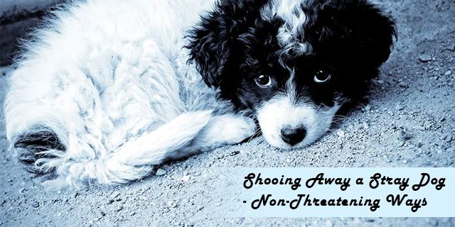 How to Deal with a Stray #Dog in a Passive Manner?