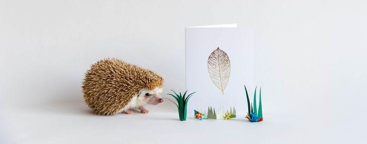 Amelia Hedgehodge greeting cards