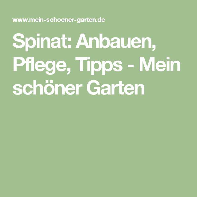 Spinat: Anbauen, Pflege, Tipps - Mein schöner Garten