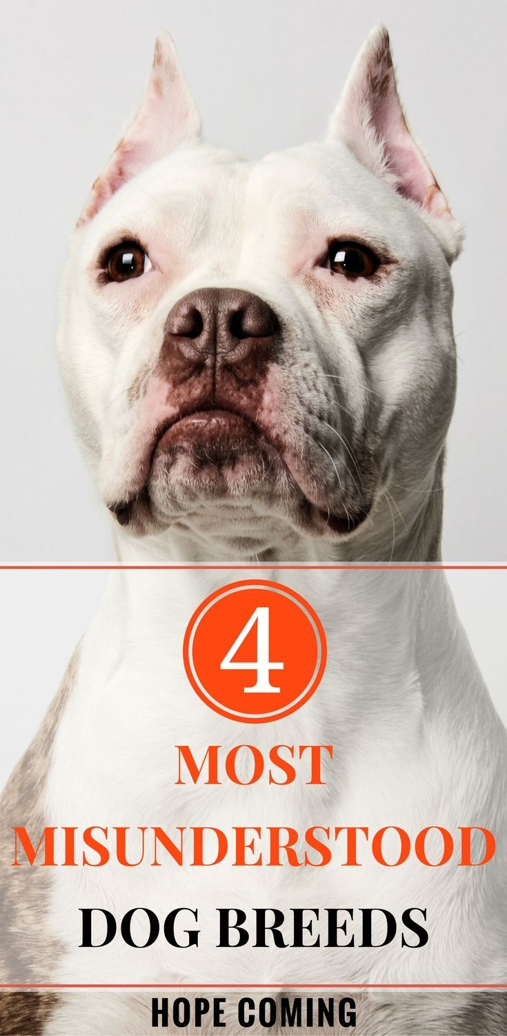 4 Most Misunderstood Dog Breeds Dog Breeds Dogs Puppy