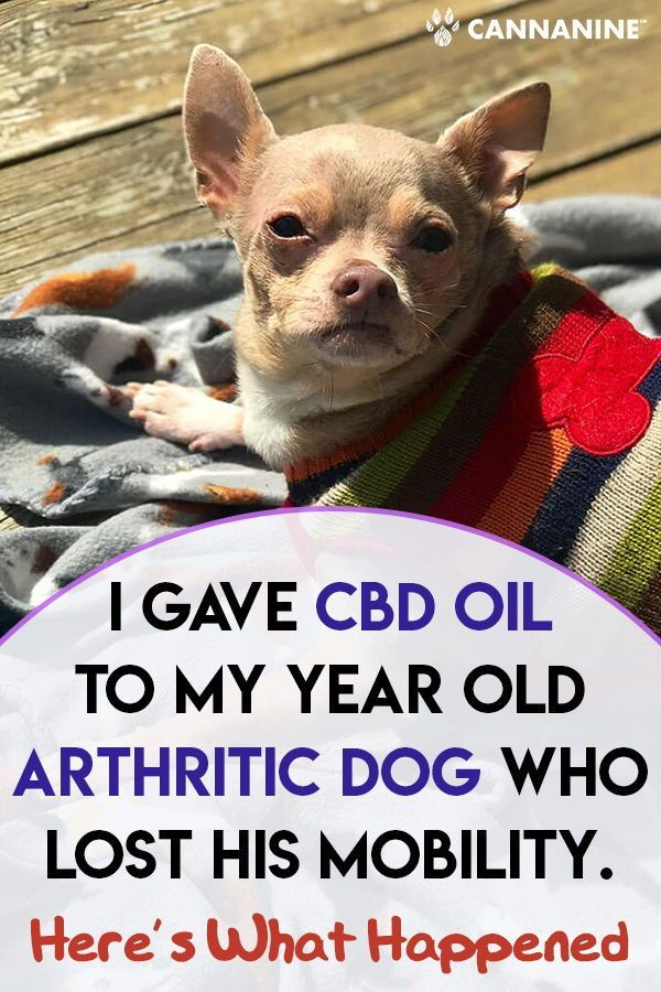 I Gave Cbd Oil To My 12 Year Old Arthritic Dog Who Lost His Mobility Here S What Happened In 2020 Pets Dogs Puppy Insurance