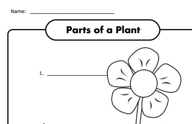 parts of a plant worksheet for k free let s learn english kids pinterest science. Black Bedroom Furniture Sets. Home Design Ideas