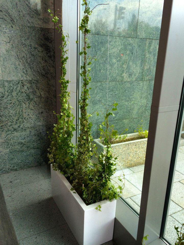 Hedera installation by ROSMARINO / břečťanová instalace