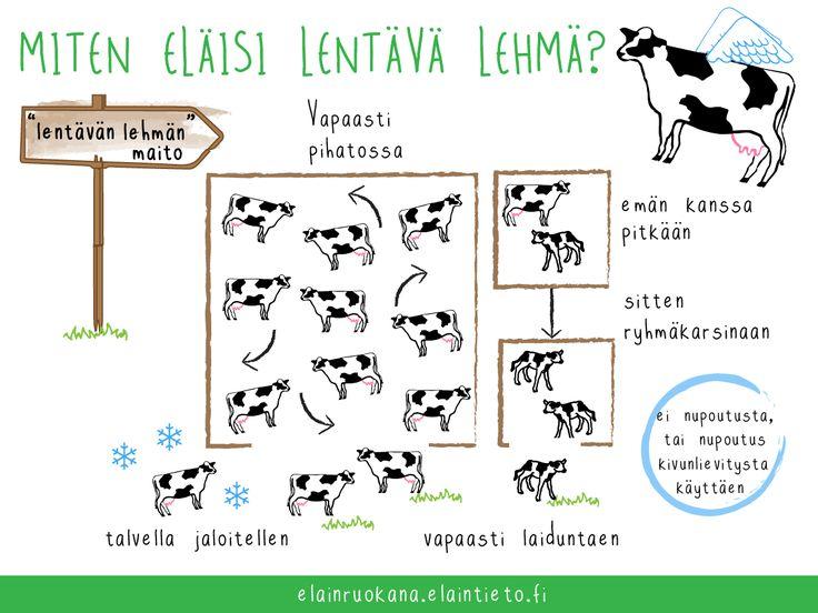 Vapaana navetassa pidettävän, ulkona jaloittelevan ja kesällä laiduntavan lehmän maitoa ei ole erikseen myynnissä. Osalla tiloista lehmät kuitenkin elävät tällaista elämää.