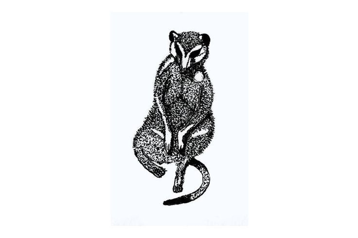 A personal favorite from my Etsy shop https://www.etsy.com/listing/526556374/sitting-meerkat-ink-drawing-digital
