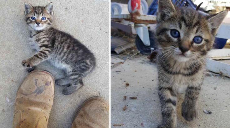 - Hladová koťátka přišla škemrat k lidem o pomoct. Dočkala se jí?