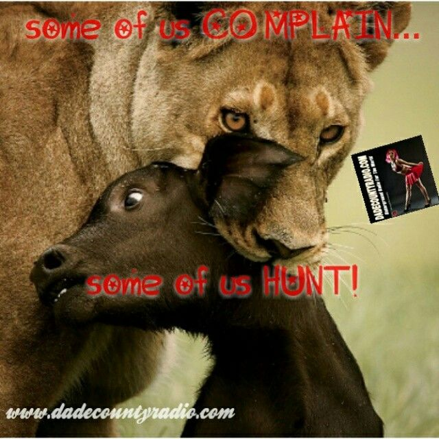Some of us complain. Some of us hunt