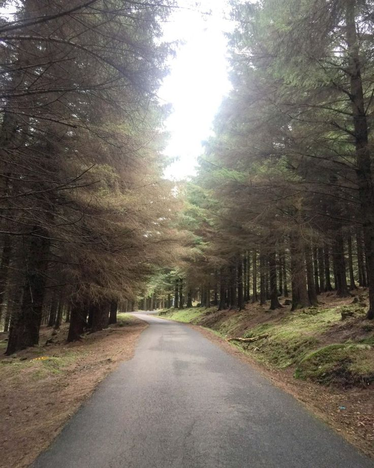 Ticknock Forest is located in the Dublin Mountains. This beautiful National Park offers up to 10 km of mountain and forest walks with some spectacular views of Dublin City, Dublin Bay, Bray Head and the Wicklow Mountains.  http://wheretheheartis.co.za/exploring-ticknock-forest/