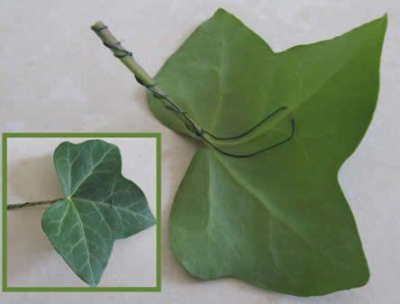 Wiring Ivy Leaf