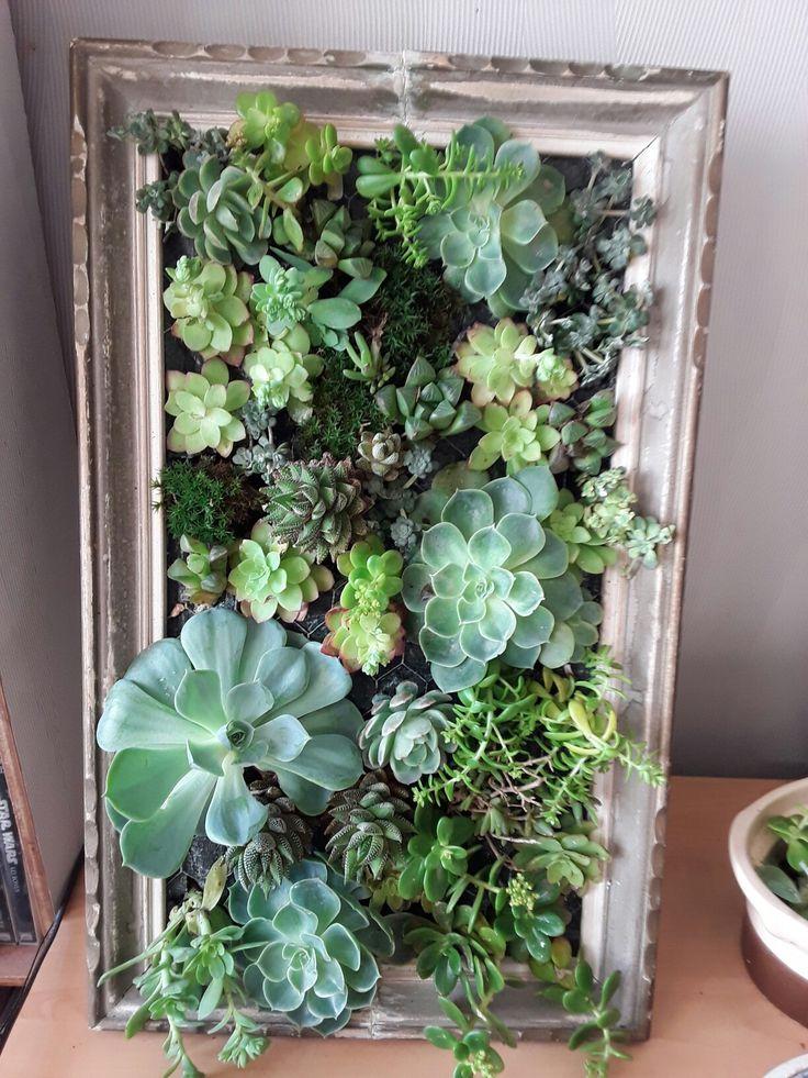 55 best plantes images on Pinterest Plants, House plants and - petit jardin japonais interieur
