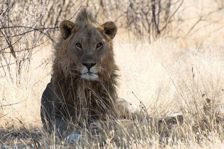 Viaggio in Namibia ai confini con l'Angola dove i colori degli animali selvatici si confondono con quelli della savana, e tu capisci che sei a casa loro e devi rispettarli .#CalzeGMtravel
