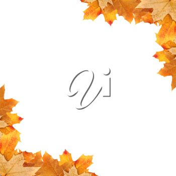 Royalty Free Photo of a Fall Background