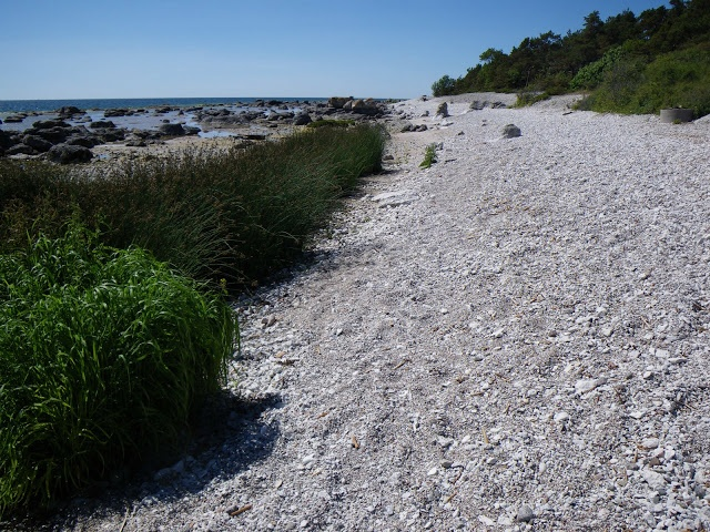 Fåro is a remote island NE of #Gotland.Beautifulbeaches oneastern coast.