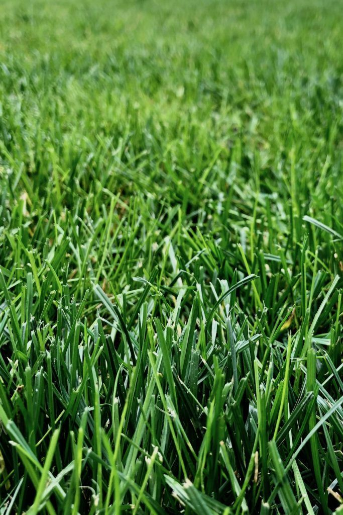 When Does Grass Stop Growing In The Fall Here S How Long You Ll Have To Mow The Lawn In Autumn And When You Can Fina With Images Growing Grass Sandy Soil Best