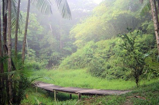 La Guyane est traversée par l'Amazone et la forêt amazonienne. Ce territoire constitue un véritable réservoir de diversité biologique de la biosphère du fait de la forêt équatoriale, qui couvre près de 95 % de la région. © Luc Ancel