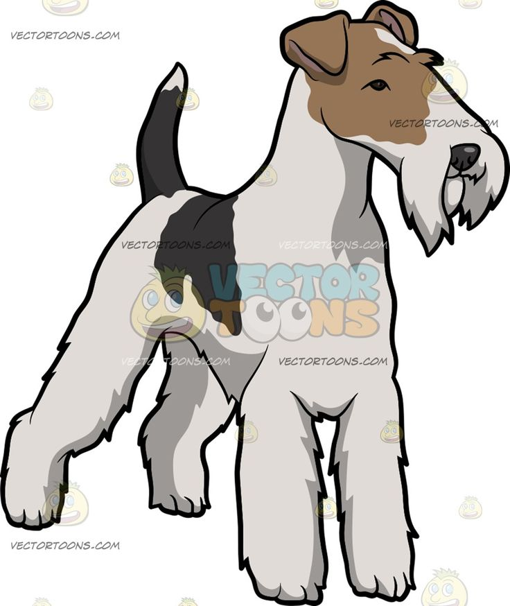 A Curious Wire Fox Terrier :  A dog with brown off white and black scruffy coat standing tall while looking at something in intrigue  The post A Curious Wire Fox Terrier appeared first on VectorToons.com.