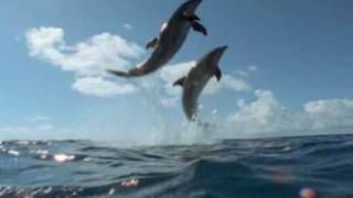Cool Change Little River Band, via YouTube.   Awesome and inspiring video. I love dolphins and whales and I miss them terribly being land-locked!