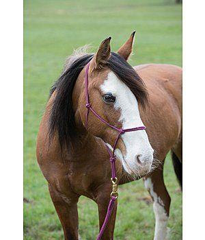 Bodenarbeit - Pferd - Krämer Pferdesport Österreich
