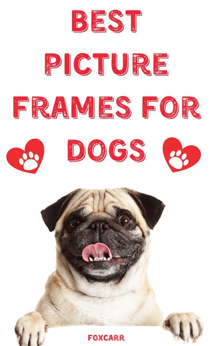 5 Great Picture Frames For Your Dog In 2020 Dog Photo Frames