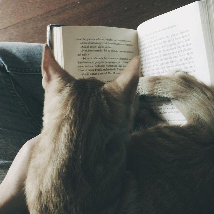 Penso che le persone tristi cerchino sempre di rendere le persone felici. Perché loro sanno com'è sentirsi completamente inutili e non vogliono che nessunaltro si senta così #book #books #cat #cats #catsagram #catstagram #instagood #kitten #kitty #kitt