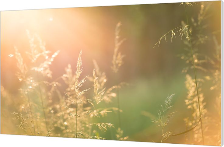 Summer feeling. Door met opzet het zonlicht tegen het binnenste van de lens te laten reflecteren ontstond er een prachtige collectie kleuren en warme tinten. Luxe wanddecoratie van Wallstars.