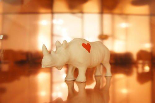 rhino love a sass and bide curiosity by moi