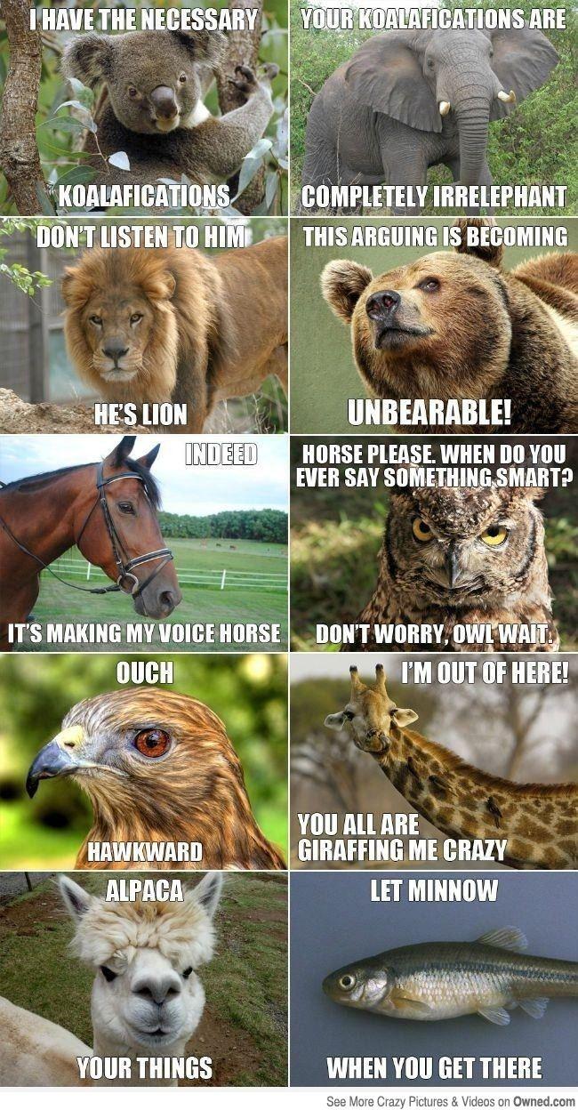 Animal Meme conversation! Hahaha I seriously couldn't stop laughing!