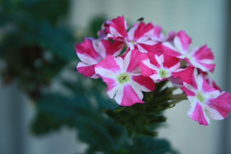 flores de otoño =)