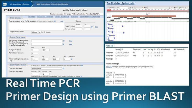 Primer designing for real time PCR using NCBI Primer Blast | Primer design, Primer, Real time