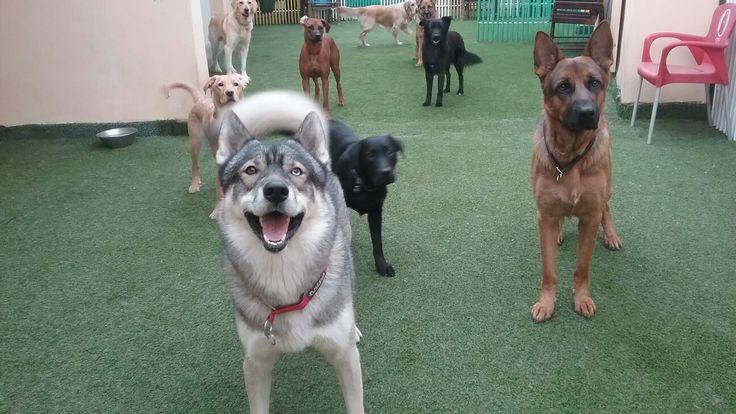 Happy dogs 😊🐶👍