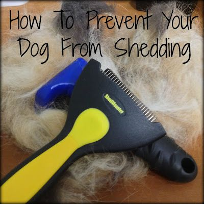 How To Prevent Your Dog From Shedding Dog Information