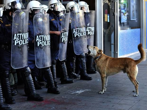 Loukanikos dead: News of Greek riot dog's death prompts outpouring of tributes - Europe - World - The Independent