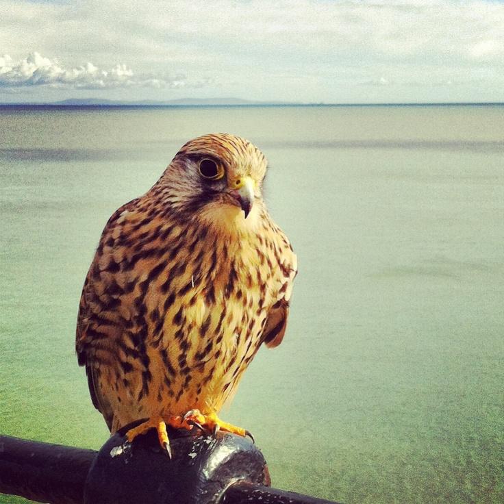 Part time ornithologist