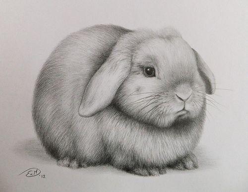 Realistic Pencil Drawings Animal Weekly Flickr Flickr Blog
