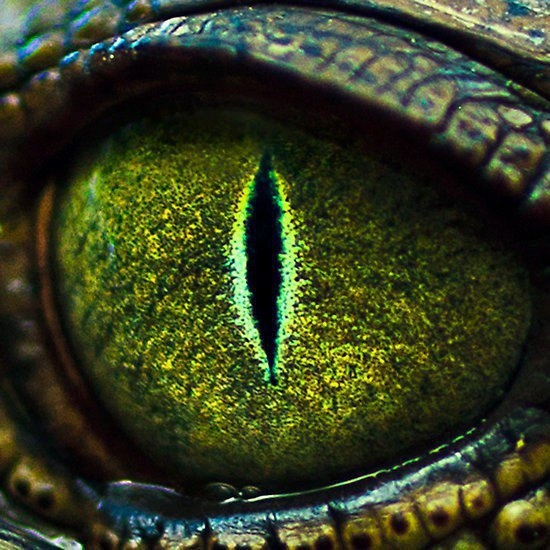 Alligator Eye Wildlife Amp Nature Up Close Pinterest
