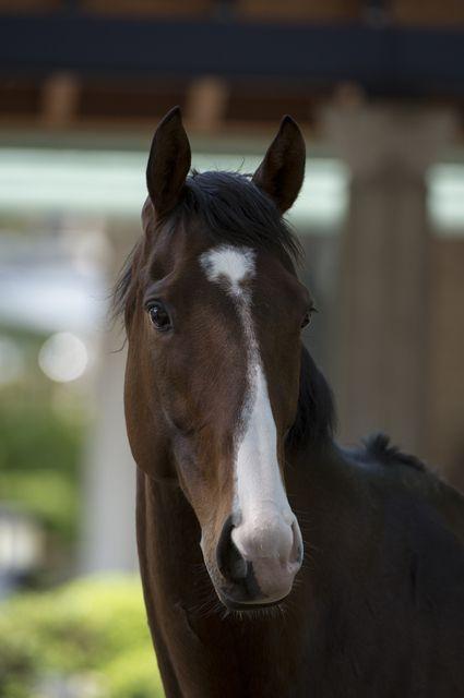 馬の鼻 (2)