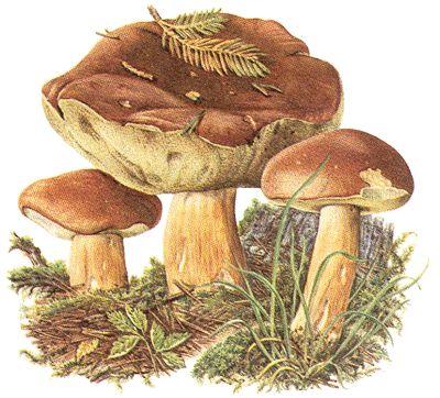 http://www.neckarkiesel.de/img/92-marone-1-4.gif