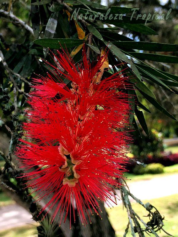 Los 8 rboles de floraci n m s espectacular para tu jard n for Arboles ornamentales jardin